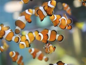 Ripley's Aquarium Toronto & free time
